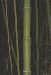 kagawa_012